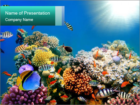 Scuba Diving In Egypt PowerPoint Template