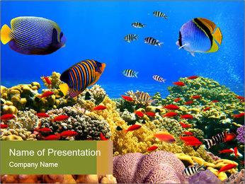 Bright Oceanic Wildlife PowerPoint Template