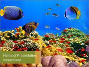 Bright Oceanic Wildlife PowerPoint Templates