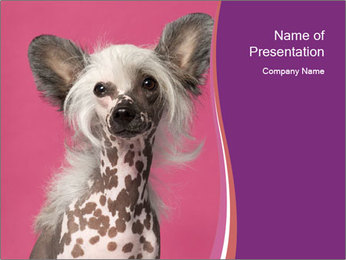 Glamour Dog PowerPoint Template