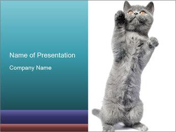 Small British Kitten PowerPoint Template