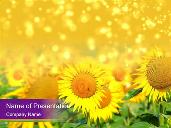 Bright Sunflowers PowerPoint Template