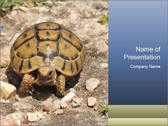 Turtle in Wildlife PowerPoint Template