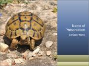 Turtle in Wildlife PowerPoint Templates