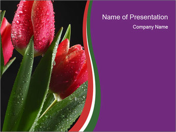 Selling Tulips PowerPoint Template