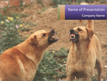 Fighting Dogs Plantillas de Presentaciones PowerPoint