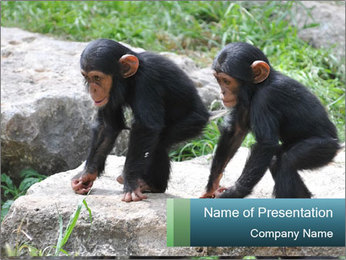 Two Small Gorillas PowerPoint Template