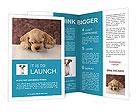 0000026822 Brochure Templates