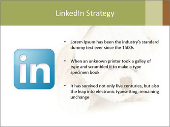 Beige Teddy Bear Modèles des présentations  PowerPoint - Diapositives 12