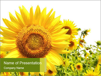 Season of Sunflowers PowerPoint Template