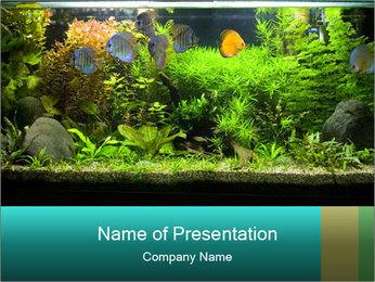 Aquarium in Office PowerPoint Template