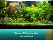 Aquarium in Office PowerPoint Templates