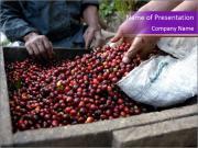 Columbian Coffee PowerPoint Templates