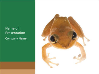 Small Tropical Frog PowerPoint Template