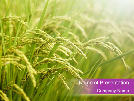 Chinese rice field powerpoint template backgrounds google slides chinese rice field powerpoint template toneelgroepblik Image collections