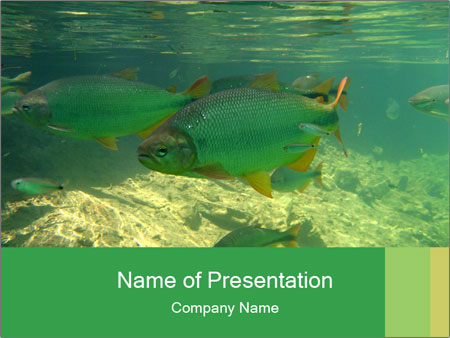 swimming mangrove fish powerpoint template & backgrounds id, Modern powerpoint