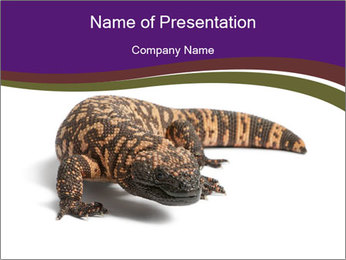 Dangerous Gila Monster PowerPoint Template