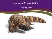 Dangerous Gila Monster PowerPoint Templates