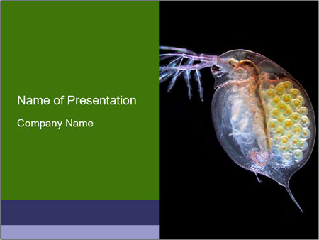 study microbiology powerpoint template & backgrounds id 0000029172, Modern powerpoint