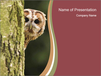 Curious Owl PowerPoint Template