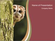 Curious Owl PowerPoint Templates