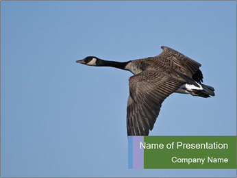 Flying Goose PowerPoint Template