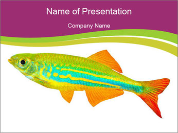 Multicolored Fish PowerPoint Template