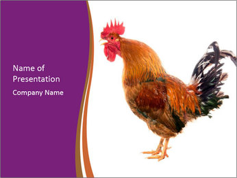 Rooster Screaming in the Morning PowerPoint Template