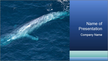huge whale in the ocean powerpoint template backgrounds google