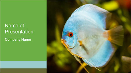 Blue Tropical Fish PowerPoint Template