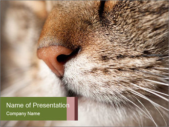 Cat's Cute Nose PowerPoint Template