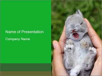 Small Rabbit in Human Hands PowerPoint Template
