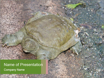 Turtle in the Zoo PowerPoint Template