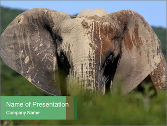 Elephant in Safari PowerPoint Template