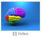 Human Brain Videos