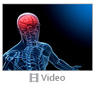 Anatomy Brain Video