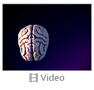 3D Human Brain Picture Video