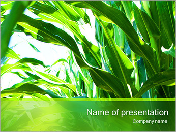 Corn Greenery PowerPoint Template