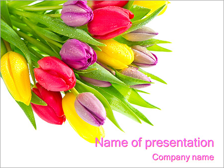 bunch of tulip flowers powerpoint template & backgrounds id, Modern powerpoint