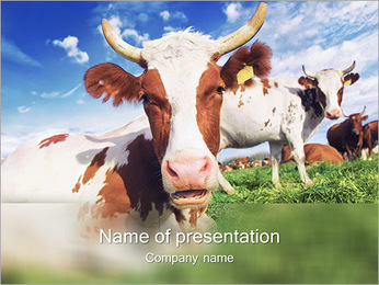 Cow Farm PowerPoint Template