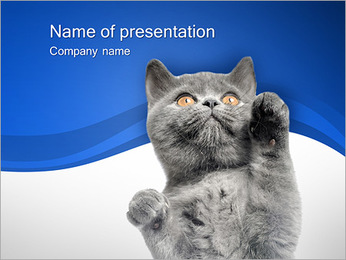 Grey Kitty PowerPoint Template