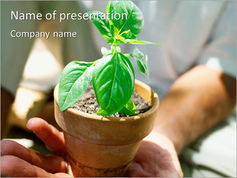 Pot With A Plant PowerPoint Template
