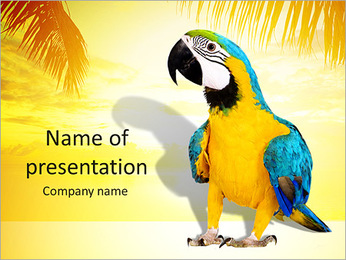 Colorful Parrot PowerPoint Template