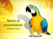 Colorful Parrot PowerPoint Templates