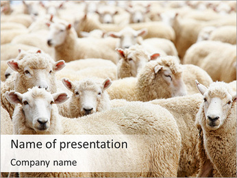 Herd Of Sheep PowerPoint Template