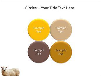Troupeau de moutons Modèles des présentations  PowerPoint - Diapositives 18