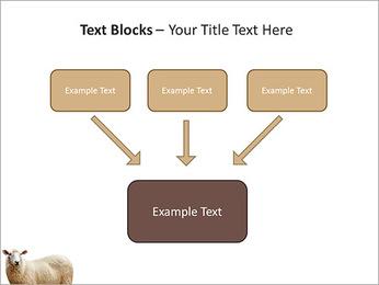 Troupeau de moutons Modèles des présentations  PowerPoint - Diapositives 50