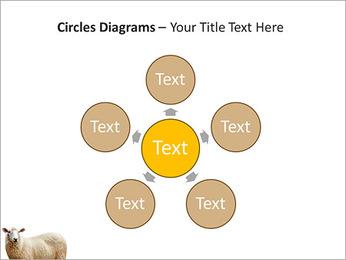 Troupeau de moutons Modèles des présentations  PowerPoint - Diapositives 58