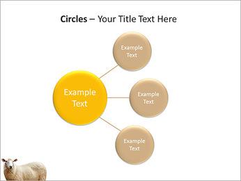 Troupeau de moutons Modèles des présentations  PowerPoint - Diapositives 59