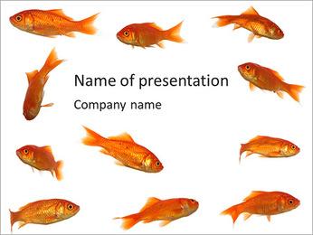 Aquarium Golden Fish PowerPoint Template